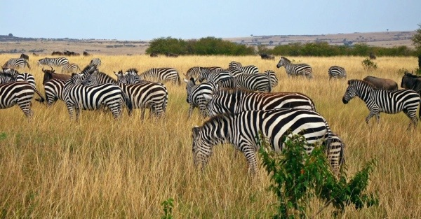 You can walk amongst heards of zebras who have no fear of humans