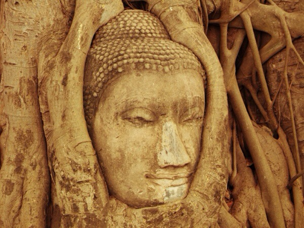 Buddha Head Tree at Wat Phra Mahthat