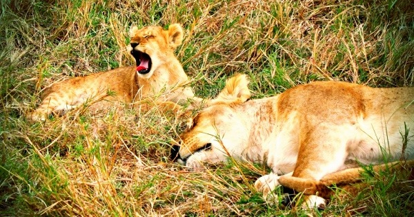 East Africa enjoys clear weather in January.  Photo from: Best Budget African Safari