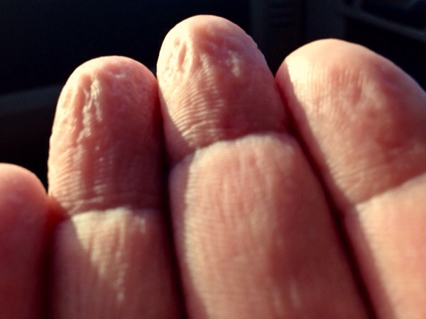 New evidence suggests our hands wrinkle in water as a reflex to increase grip on submerged objects.  This amphibious society has evolved specialized reflexes inherited from seals to perform seemingly impossible feats of diving.